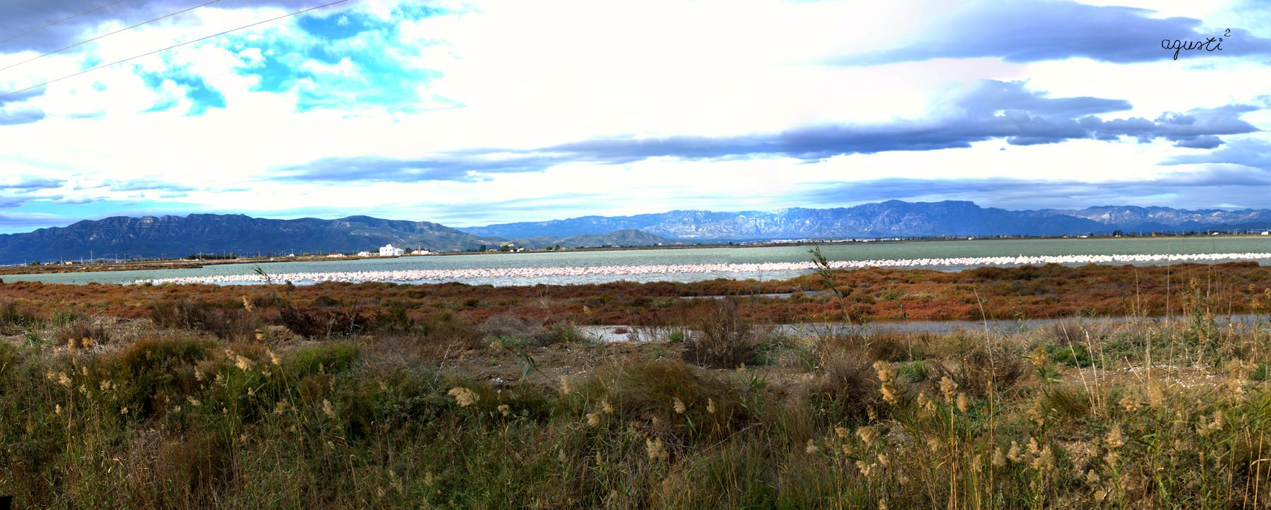 la tancada una vista dels flamencs al resguard del vent