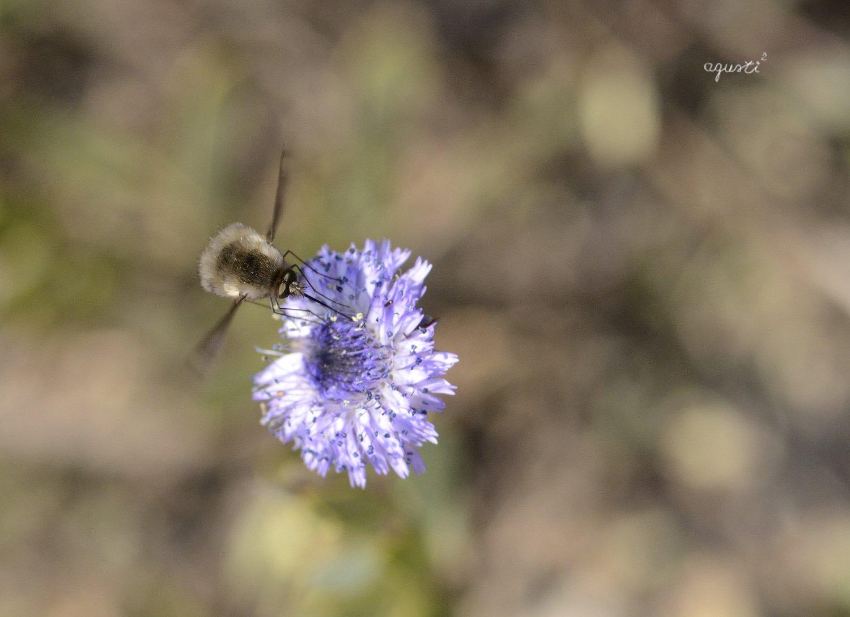 fauna i flora - Alos