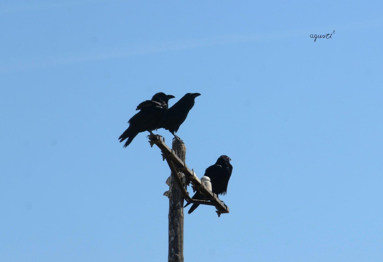 corbs esperant menjar