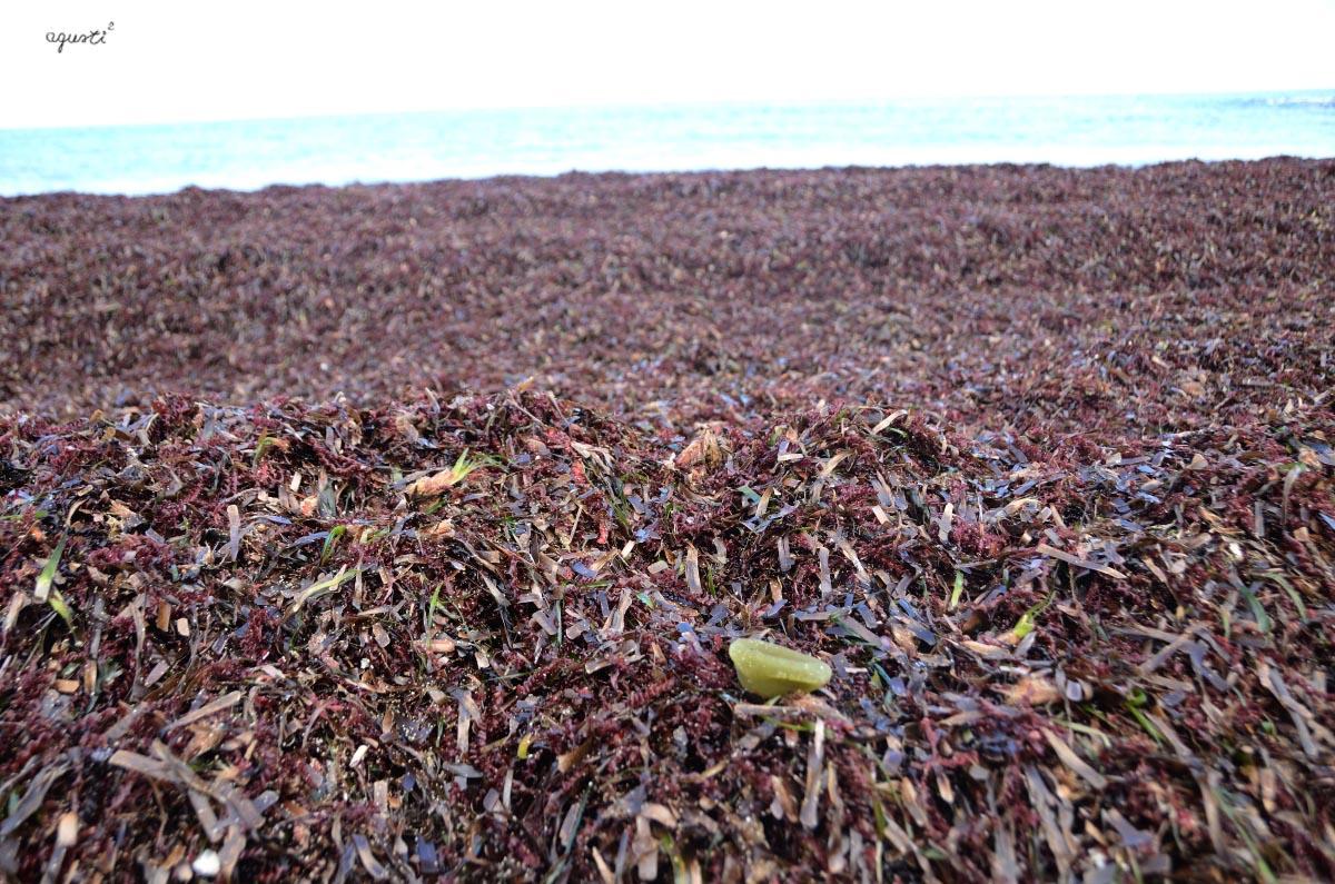 restes de algues