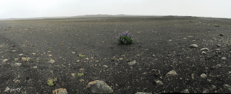 RUTA 1 AKUREYRI_28(07-2016)
